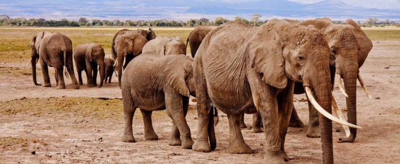 Why would you consider planning an incentive trip to Southern Africa or East Africa?